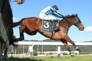 Steeplechasing plans may be put on hold