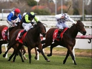 Sunlight shines in Group 3 Quezette Stakes