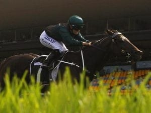 Rosehill trial the next step for Lanciato