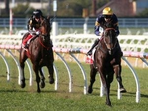 Brutal among McKenzie Stakes nominations