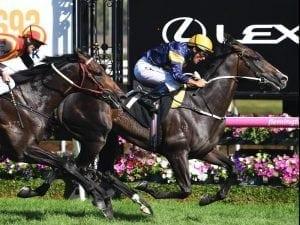 Grunt tackles Vega Magic in Memsie Stakes
