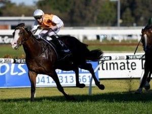 Menari added to Newgate stallion roster