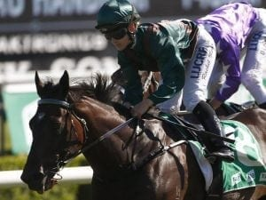 Lanciato primed for Tramway Stakes