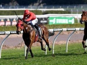 Redzel odds-on favourite for race return