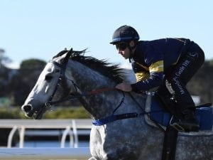 Owner keeping options open for Chautauqua