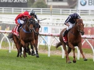 Widgee Turf likely to run in Penny Edition