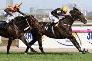 Bright future tipped for Kiwi-bred Grunt