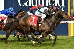 Classy Kiwi mare sends strong signal on Spring prospects