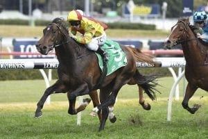 Clark rewarded for chasing Master Ash ride