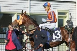 Rusof in line for Kiwi Group 1