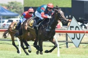 Potential Cox Plate campaign for Milseain