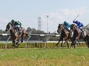 Golden Tycoon to step up in Rosebud