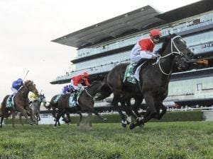 Relaxed Bergerac ready for Sunshine Coast