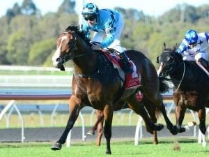 Navy commands interest for in-form stable
