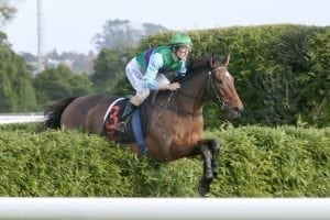 Fannin hoping Opal can sparkle in Hunt Cup