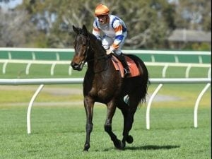 Hey Doc draw 'perfect' for Carlyon return