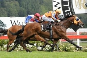Age Of Fire joins Weir's Victorian stable