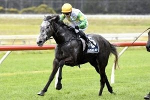Danzdanzdance on track after big first up win