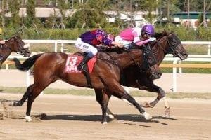 Tsui proud of Fight Hero's effort in defeat in Korea Sprint