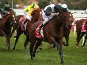 Ocean Knight on target for Danehill Stakes