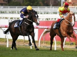 Flemington to bring out the best in Grunt