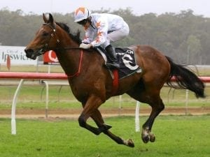 Qld spring hopes to trial at Cranbourne