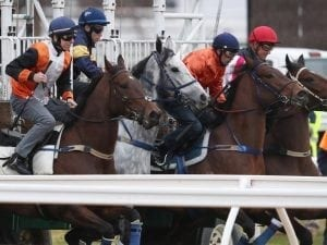Chautauqua gets out in Flemington jump-out