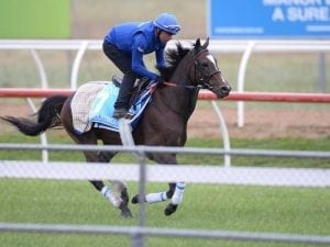 Godolphin trio settle in well at Werribee