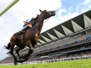 Order Of St George retired to stud