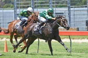Rogerson keen to unleash mare's power