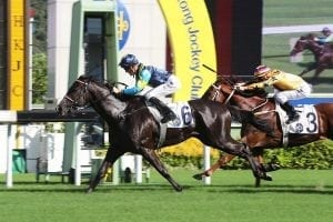 Fresh Banner has Schofield eyeing a follow-up in the Kwangtung Handicap Cup