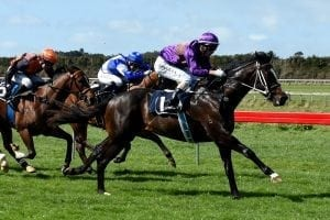 Lincoln Falls dazzles on debut