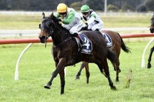 Tiley in no rush with exciting filly