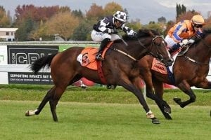 Murdoch-trained Mihaul euthanised