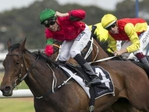 Daysee Doom faces sharp test in G2 Sheraco
