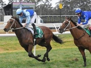 Surprise packet Tarka on Vic Derby path