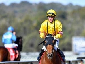 Blinkers provide spark for ex-Perth mare