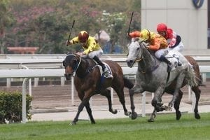 Eyes on December prize for Southern Legend ahead of HKSAR Chief Executive's Cup return