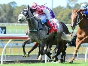 Gilded Lion helps to ease trainer's pain