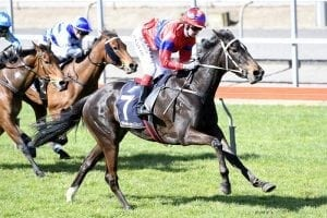 Verry Elleegant joins leading Victorian stable