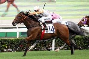 Wishful Thinker a potential stakes horse, says Teetan