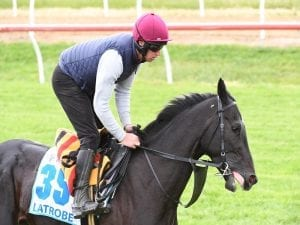 A look at the Group One Mackinnon Stakes