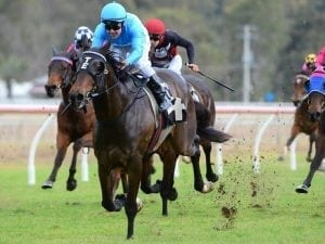 Capitulate to again carry blinkers