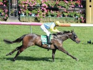 Blazer Stakes return for Bring Me Roses