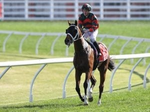The Autumn Sun too immature for Cox Plate