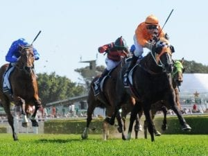 Cup hope Ace High never been better: Payne
