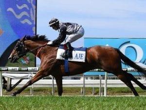 Houtzen to chase Manikato Stakes