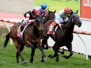 Missrock aims for fresh win in Moir Stakes