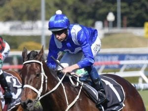 Winx headlines 14 nominations for Turnbull