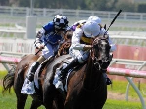 Night's Watch recovers from lameness issue